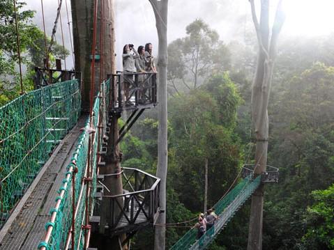 canopy-walkway-1-479x359